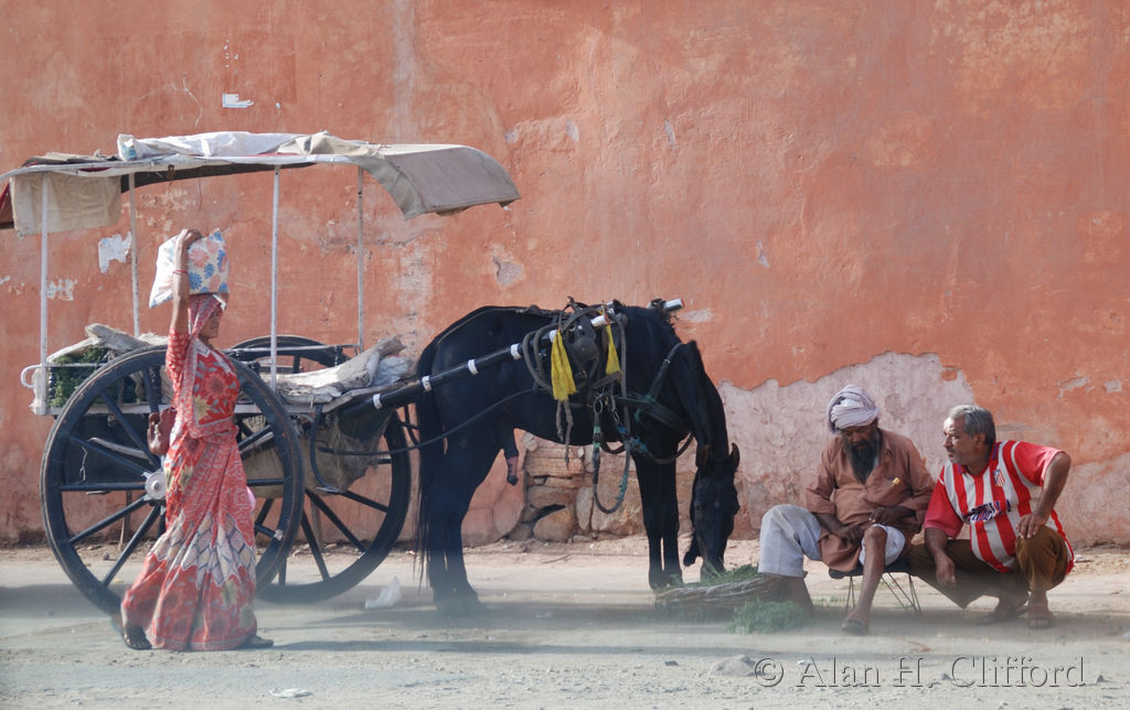 A women passes a horse and cart near the Ghat Gate, Pink City, Jaipur
